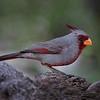 Maker:  Dale Lindenberg<br /> Title:  Bird<br /> Category:  Wildlife<br /> Score:  14
