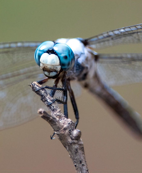 Maker:  :  Dwayne Anders<br /> Title:  Flying Machine<br /> Category:  Macro/Close Up<br /> Score:  12