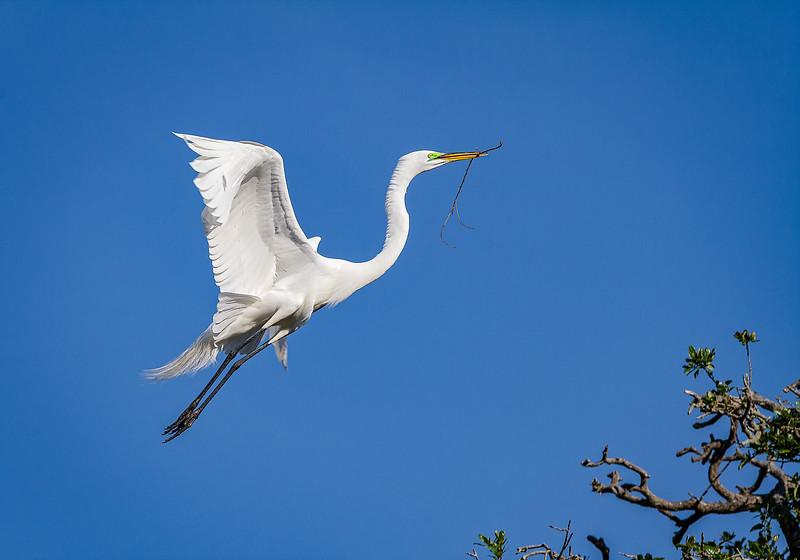 Maker:  Wayne Tabor<br /> Title:  Egret on a Mission<br /> Category:  Wildlife<br /> Score:  12