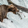 Maker:  Dale Robertson<br /> Title:  Two for Lunch<br /> Category:  Wildlife<br /> Score:  15