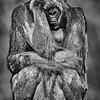 Maker:  Dale Lindenberg<br /> Title:  See No Evil<br /> Category:  Black & White<br /> Score:  14