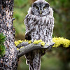 Maker:  Lee Davis<br /> Title:  Fledgling Grey on Golden Moss Perch<br /> Category:  Wildlife<br /> Score:  13