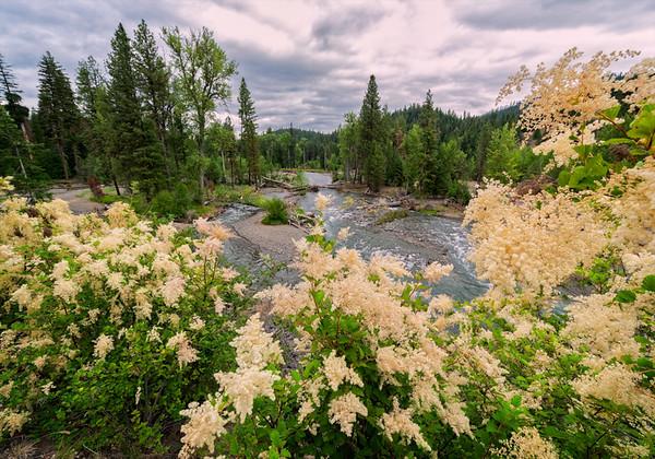 Maker:  Wayne Tabor<br /> Title:  Flowers on the American River<br /> Category:  Landscape/Travel<br /> Score:  12