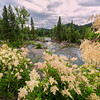 Maker:  Wayne Tabor<br /> Title:  Flowers on the American River<br /> Category:  Landscape/Travel<br /> Score:  12