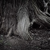 Maker:  Jim Lawrence<br /> Title:  From the Roots<br /> Category:  Black & White<br /> Score:  11