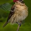 Maker:  Dale Lindenberg<br /> Title:  Bird #1<br /> Category:  Wildlife<br /> Score:  14