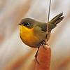 Maker:  Dale Lindenberg<br /> Title:  Bird #2<br /> Category:  Wildlife<br /> Score:  14