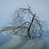 Maker:  Freeman Ligon<br /> Title:  The Tree in the Lake<br /> Category:  Pictorial<br /> Score:  11