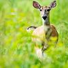 Maker:  Lee Davis<br /> Title:  Doe a Dear<br /> Category:  Wildlife<br /> Score:  13