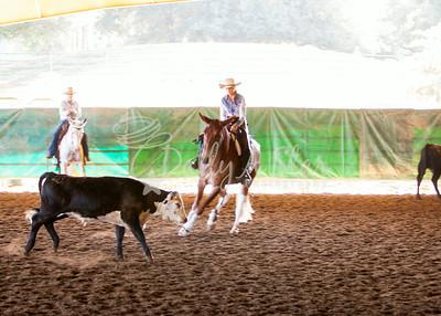 Murieta Mule Classic Cow Classes Sat 2014