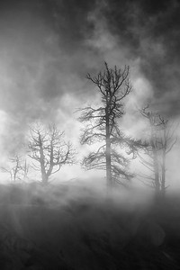 """""""GHOST TREES"""""""