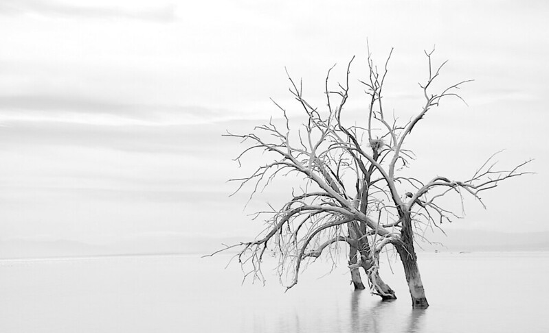 "<h1>3 Lost S Souls</h1> <h3>Amateur Black & White</h3> <i>Something about the picture</i> The body of water in the picture is the Salton Sea in Southern California.  This was on the South East end of the lake.<br><br>This was one of those pictures that make it so I should have the bumper sticker ""<b>I brake for pictures.</b>"".  I had been in this area to visit the volcanic mud pots and found this one the way.<br>It was mid afternoon when I came across these trees.  The sky was a thin overcast and the day had that heavy humid summer thunderstorm feel to it.<br>This scene struck me as iconic for the lake.  To me it feels like a dead lake and this is sign on the door that says so.<br><br><i>Photoshop info:</i><br>I used the black and white filter to convert the color image.  I purposely altered the contrast so that the sky would nearly blend into the water and the trees would stand out."