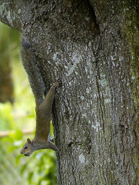 #5 'Mr. Squirrel' by srf4real.  10/20/07.  Panasonic DMC-L1.