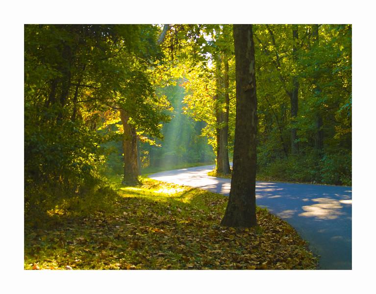 #1 'Into The Light' by Sog501.  10-13-07.  E-500.