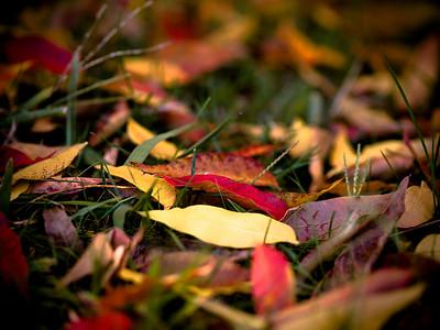 #22 'Leaf Blanket' by hamster. 10/22/07.  Olympus E-500. Exif: http://cherie1h.smugmug.com/photos/newexif.mg?ImageID=212937921