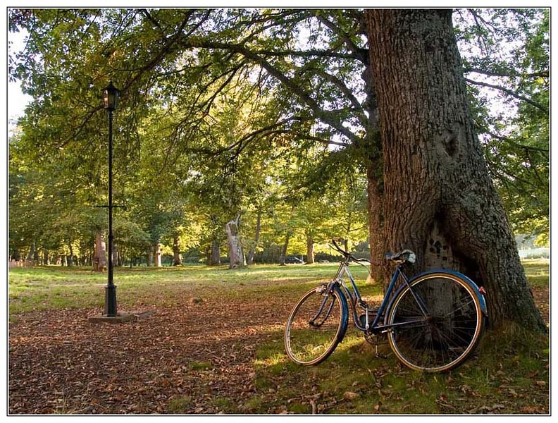 #17 'Autumn & Bicycles', by JACalvo.  10/12/07.  Olympus E-300.