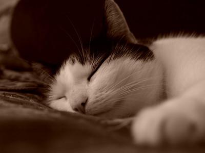 #7 'soft sleep' by jaeae. 10/06/07. Olympus E-400. Zuiko 35mm macro processed with Master 2