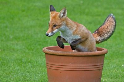 Quick brown fox