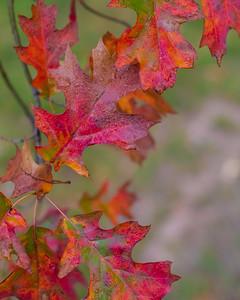 Autumn in Tulsa