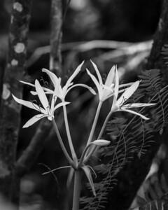Western Florida Floral