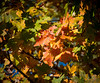 Fall Leaves at Watershed Nature Center