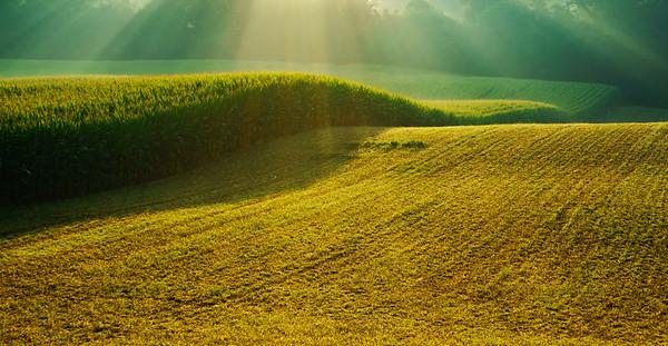 """#34  """" Sun Rays On Corn """""""