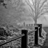 Grovelands Park Fog