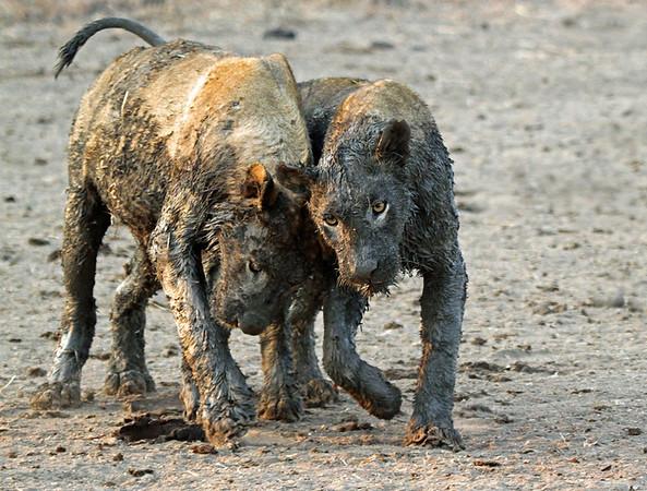 annie nash muddy lions playing