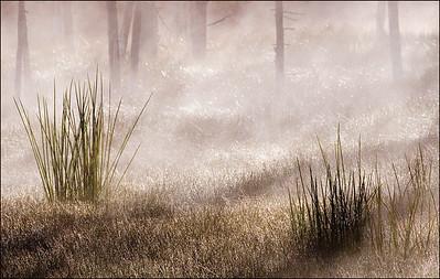 Eileen Drifting Mist