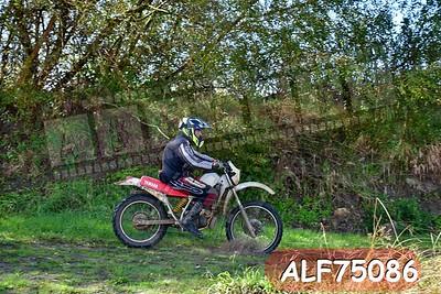 ALF75086