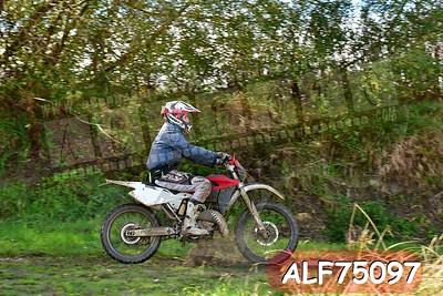 ALF75097
