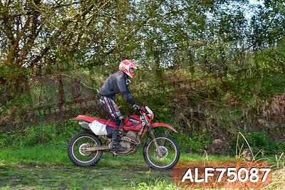 ALF75087