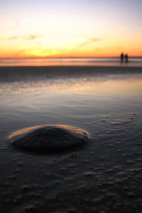 A sand dollar sits undisturbed along the shore as a couple takes a sunrise walk along Saco Bay.Photographers Name : David MurphyPhotographers Location : Old Orchard Beach, METo vote in favor for this photo, simply add a comment below. You can also share this photo on Facebook and Twitter using the buttons above.
