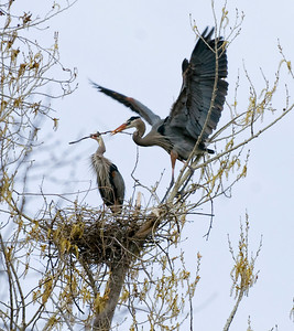 Enter Photo 1 CaptionPhotographers Name : Judy HortonPhotographers Location : Colorado Springs, COTo vote in favor for this photo, simply add a comment below. You can also share this photo on Facebook and Twitter using the buttons above.