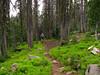 1) Subject: Vibrant life<br /> 2) Where it was taken: Summit trail<br /> 3) Basic area/region: Strawberry Mountain Wilderness, OR<br /> 4) Season taken: Summer