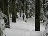 1) Subject: Old Growth Hall<br /> 2) Where it was taken: Near Gumjuwac Saddle<br /> 3) Basic area/region: Badger Creek Wilderness, OR<br /> 4) Season taken: Winter