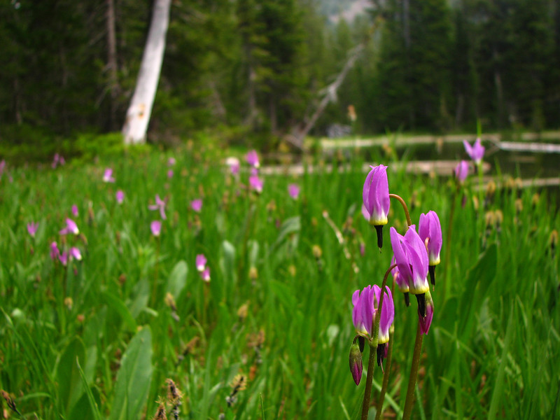 1) Subject: Shooting Stars<br /> 2) Where it was taken: Slide Lake<br /> 3) Basic area/region: Strawberry Mountain Wilderness, OR<br /> 4) Season taken: Summer