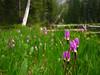 1) Subject: Shooting Stars<br /> 2) Where it was taken: Slide Lake<br /> 3) Basic area/region: Strawberry Mountain Wilderness, OR<br /> 4) Season taken: Summer