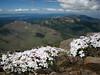 1) Subject: Phlox & Western Strawberry Mountain Range<br /> 2) Where it was taken: Strawberry Mountain summit<br /> 3) Basic area/region: Strawberry Mountain Wilderness, OR<br /> 4) Season taken: Summer