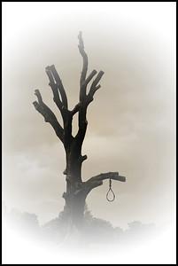 MikeH Dead Wood
