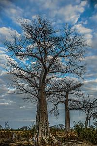 annie nash  edge of the baobab forest