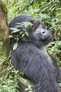 annie nash wild in rwanda