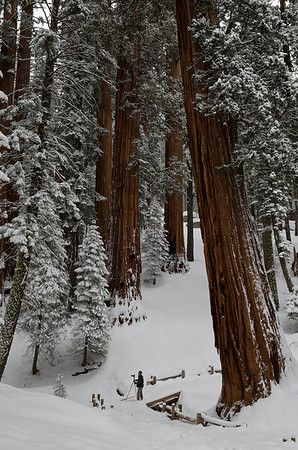 Jerry Negele in the Sequoias. (Honorable Mention, Digital Travel, N4C April 2013).