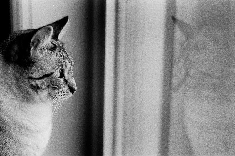 Tirage Janvier 2012<br /> Louis David<br /> Nikon F4 85mm f2<br /> Kodak Tri-X