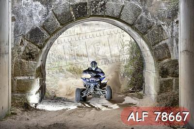 ALF 78667