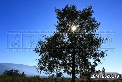 LENTE520179