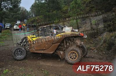 ALF75278