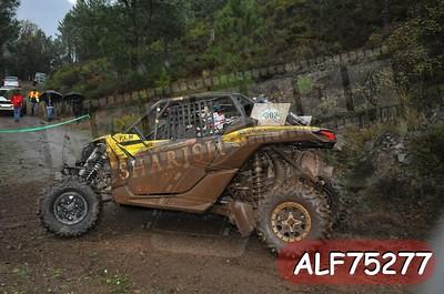 ALF75277