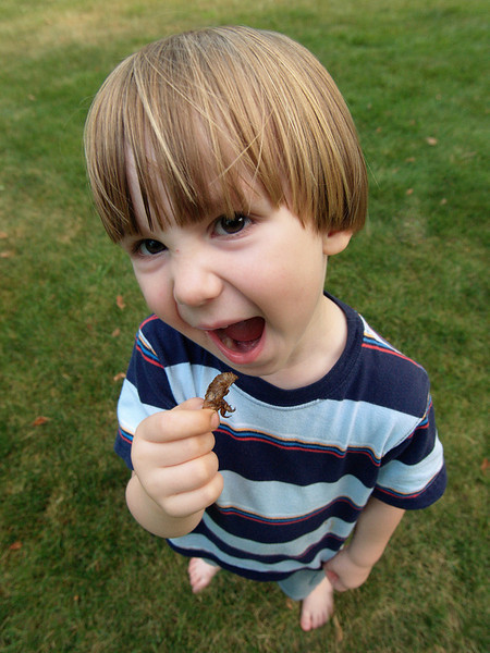"""14. """"Crunch!"""" by bg2b. Cicadas start emerging in July here.  Our son found a skin, and when I asked him to hold it up for a photo, he decided to eat it.  Yes, I managed to stop him..."""