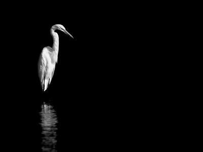 3. 'Solitude', by ZuikoGuy. 9/18/07, Olympus E-1.